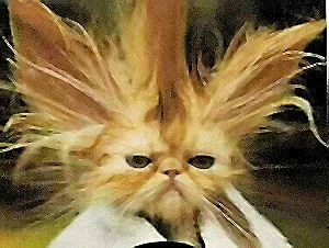 Hair schtick bad hair humor for bad hair days the bad hair cat pmusecretfo Image collections